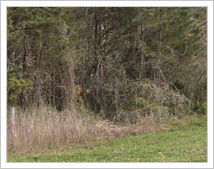 Success Story: Shelby County Land Acquisition